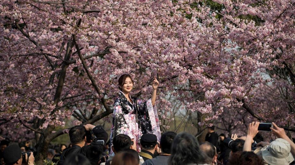 A girl dressed up in a traditional dress poses for photography enthusiasts next to a cherry blossom tree in the Gucun Park in Shanghai . (Johannes EISELE / AFP)