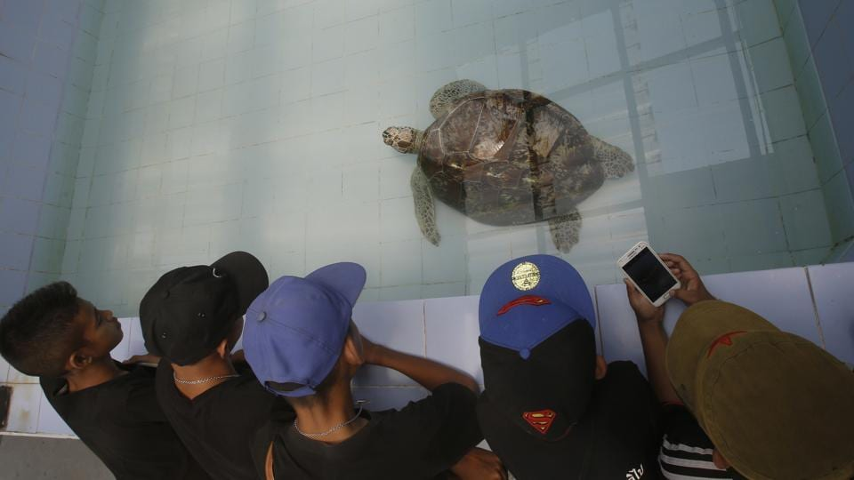 Young visitors watch the female green  turtle nicknamed 'Bank' swim in a pool at Sea Turtle Conservation Center n Chonburi Province, Thailand.  (Sakchai Lalit / AP)