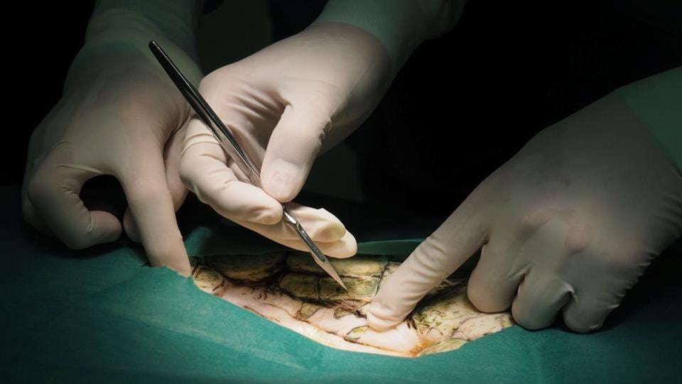 Surgeons made a 4-inch incision in Bank, removing 11 pounds of coins that had cracked part of its shell , causing a life-threatening infection. (REUTERS)