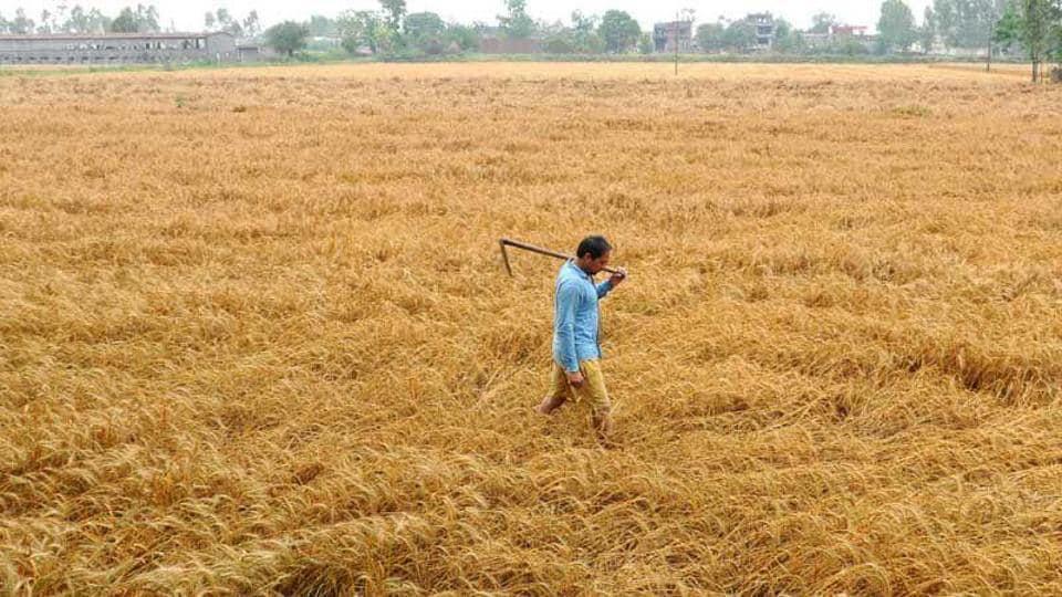 Framers,Punjab,Rainfall