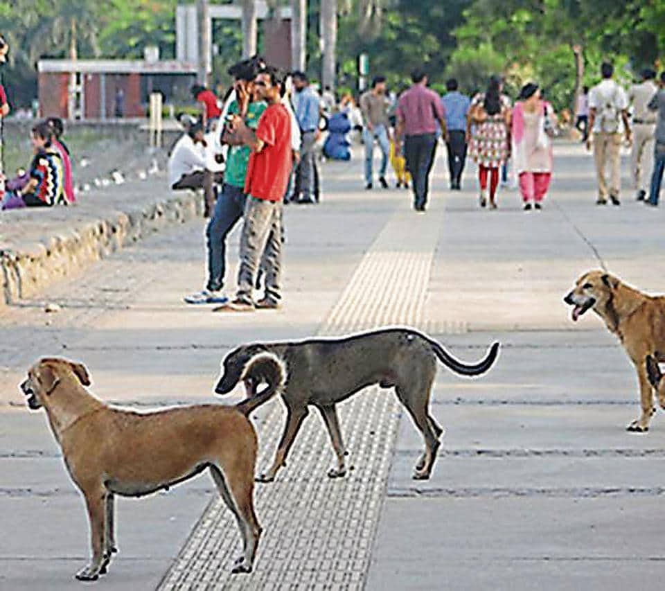 Sukhna lake,stray dogs,Punjab and Haryana high court
