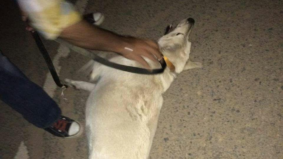 The dog tortured by staff of a security agency.