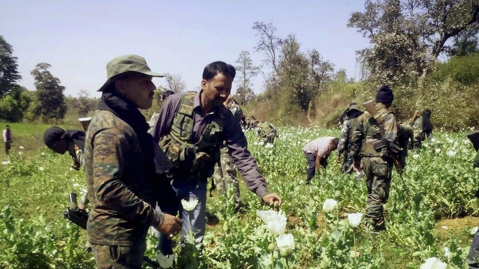 Police destroying poppy cultivation in Gadhwa district of Jharkhand.