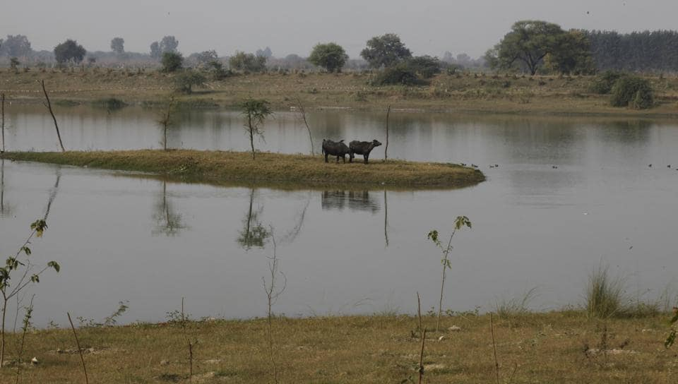 Yamuna Biodiversity Park is being redesigned so that it could attract more animals and to ensure that there is no man-animal conflict.