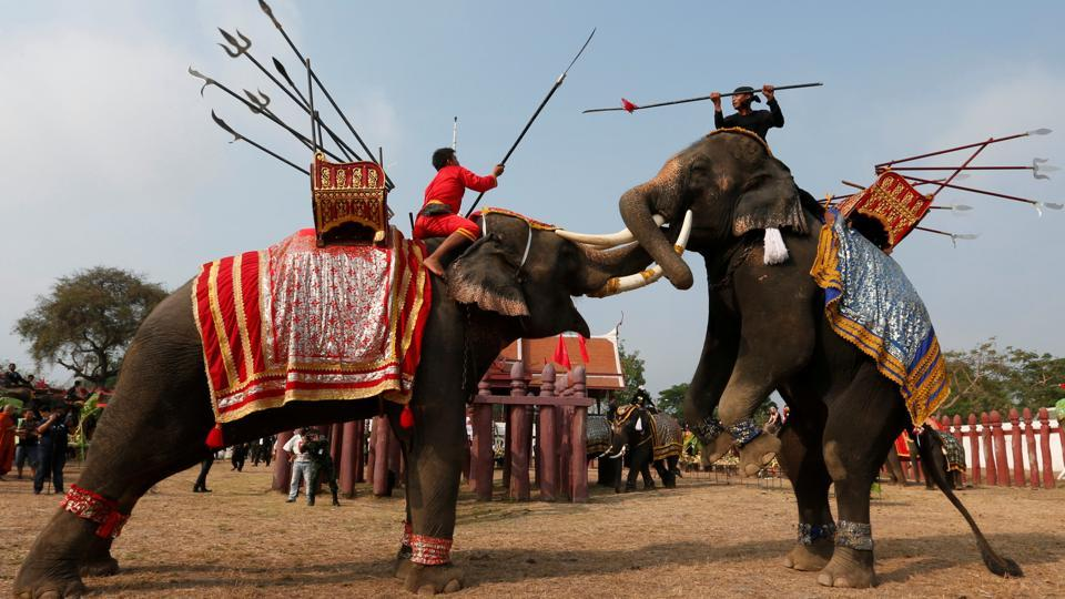 Thai mahouts take part in an elephant fighting demonstration during Thailand's national elephant day celebration in the ancient city of Ayutthaya. (REUTERS)