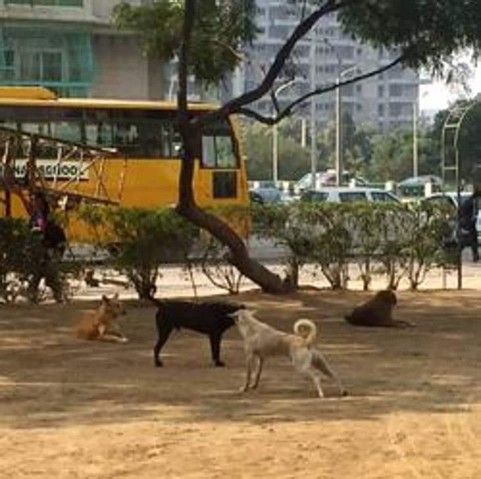 Gurgaon,stray dogs,monkeys