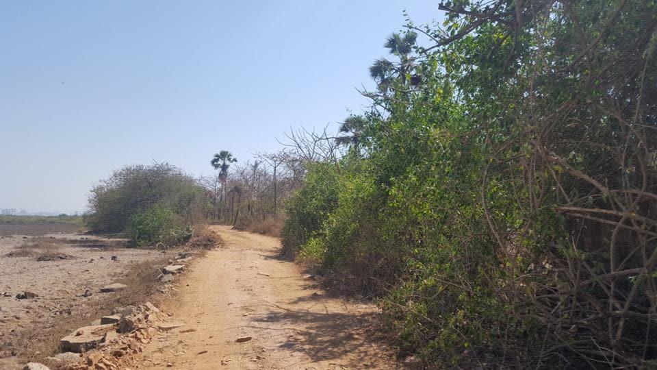 Mangroves,Manori,Gorai