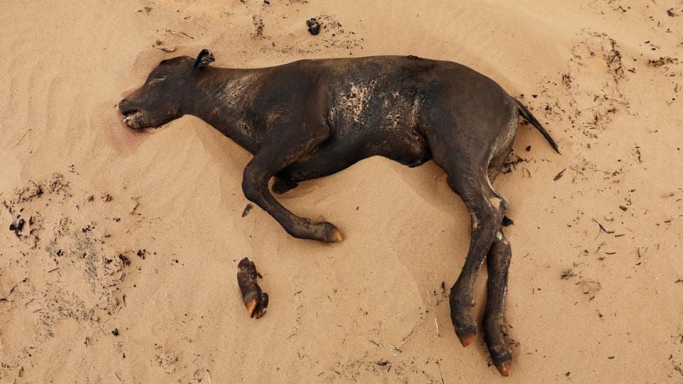 A calf killed by wildfires lies in a burned pasture near Higgins, Texas, U.S. (REUTERS)
