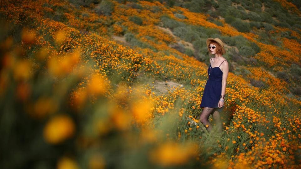 A woman walks through a massive spring wildflower bloom at Lake Elsinore, California. (Lucy Nicholson / REUTERS)