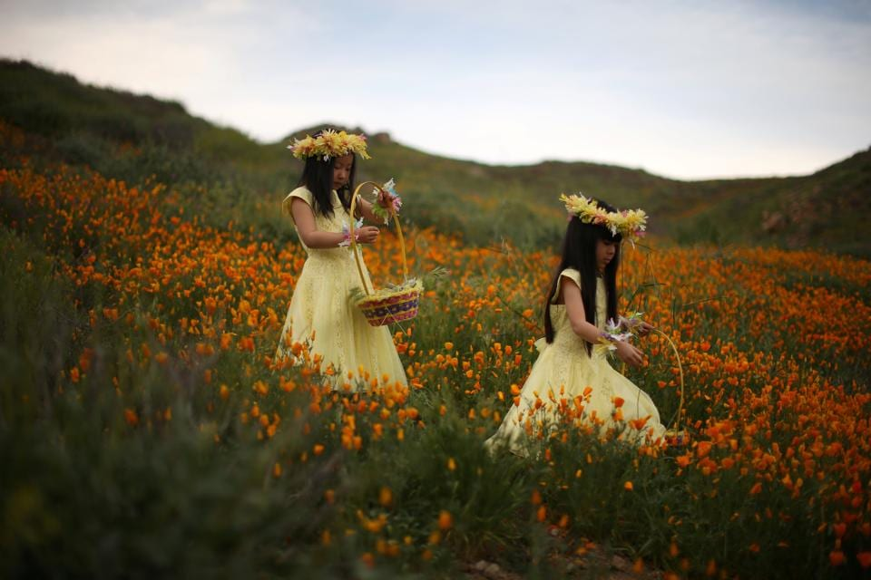 Julia Lu, 5, (L) and Amy Liu, 5, walk through a massive spring wildflower bloom caused by a wet winter in Lake Elsinore, California (Lucy Nicholson / REUTERS)