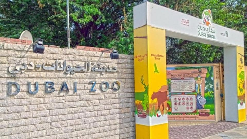 Sheikh Mohammed bin Rashid al-Maktoum ordered those detained for torturing the cat to perform community service by cleaning the Dubai zoo for four hours a day for three months.