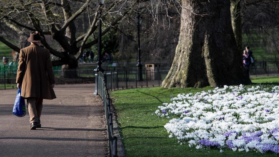 A man walks past a bed of crocuses in St James's Park as Londoners enjoy the warm weather on an early spring day in London . (CHRIS J RATCLIFFE / AFP)