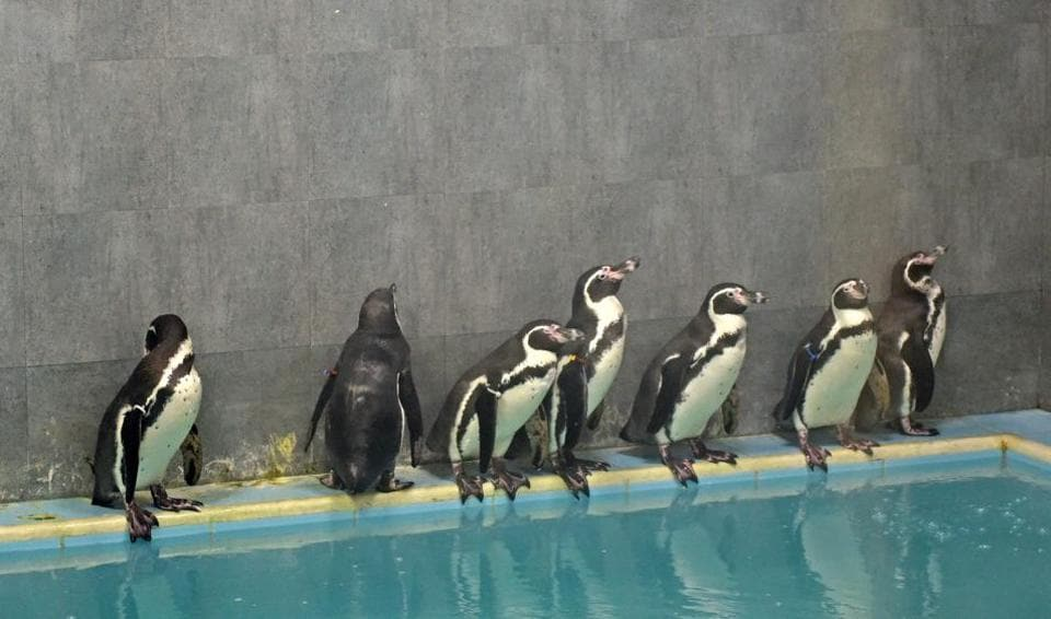 Initially, eight penguins were brought from South Korea last July. However, one of the birds succumbed to stomach and liver infections following which the remaining seven were quarantined immediately.