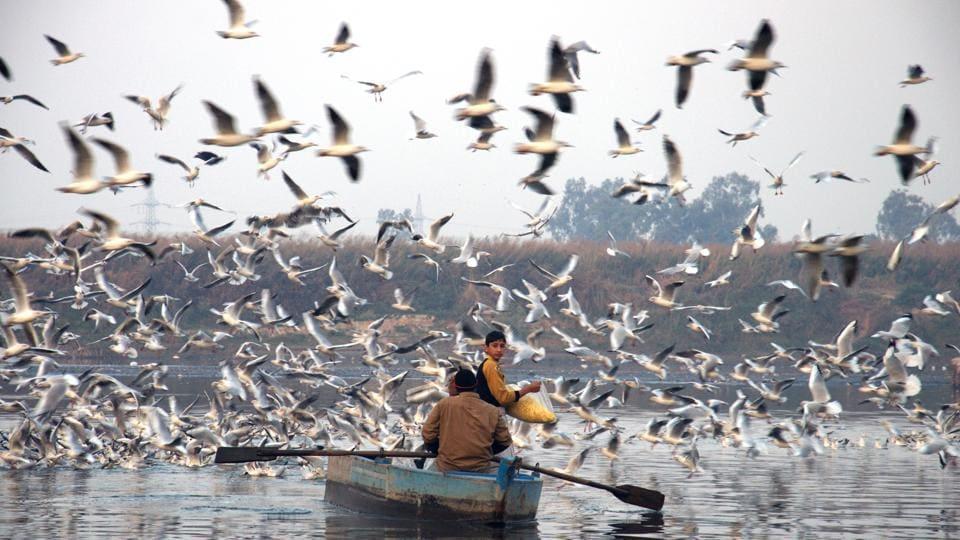 Red Avadavat,Brown-Headed Gulls,Aravalli Biodiversity Park