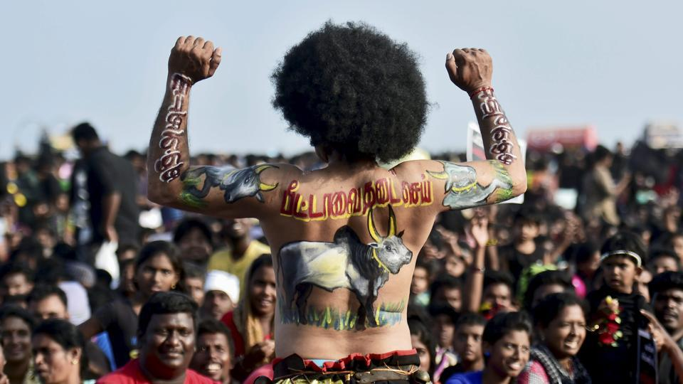 A youth with a bull painted on his back takes part in the protest in support of jallikattu at the Marina beach in Chennai.