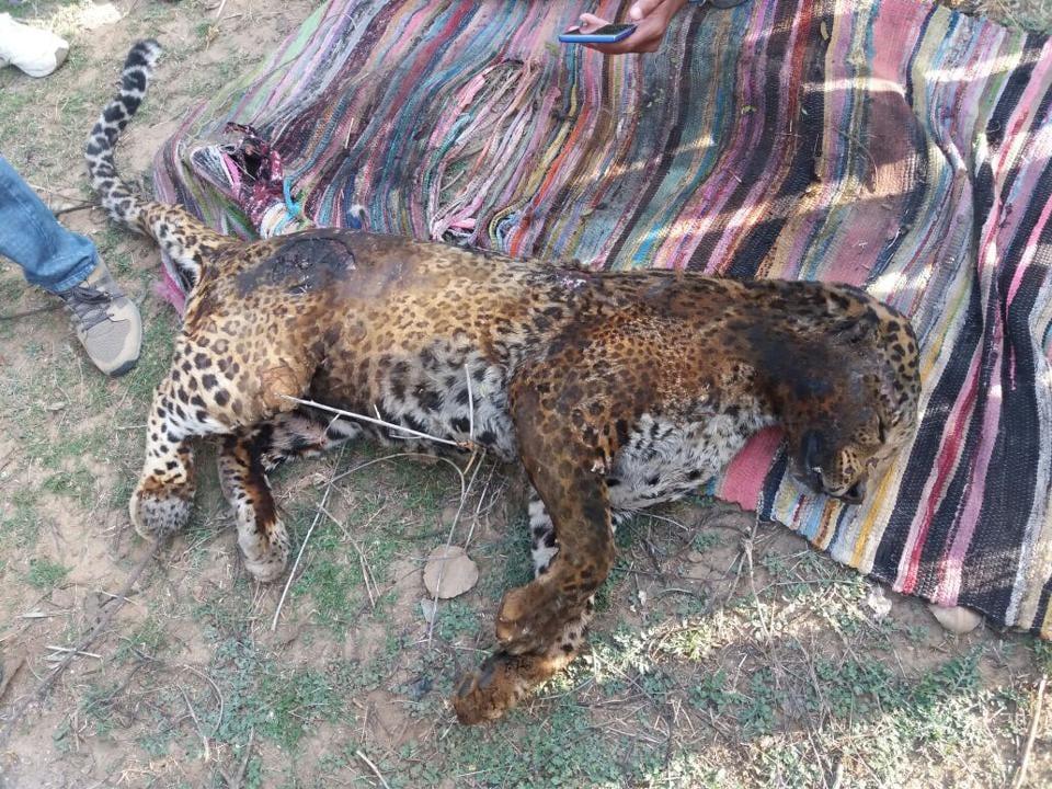 leopardkilled,mobfury,alwar