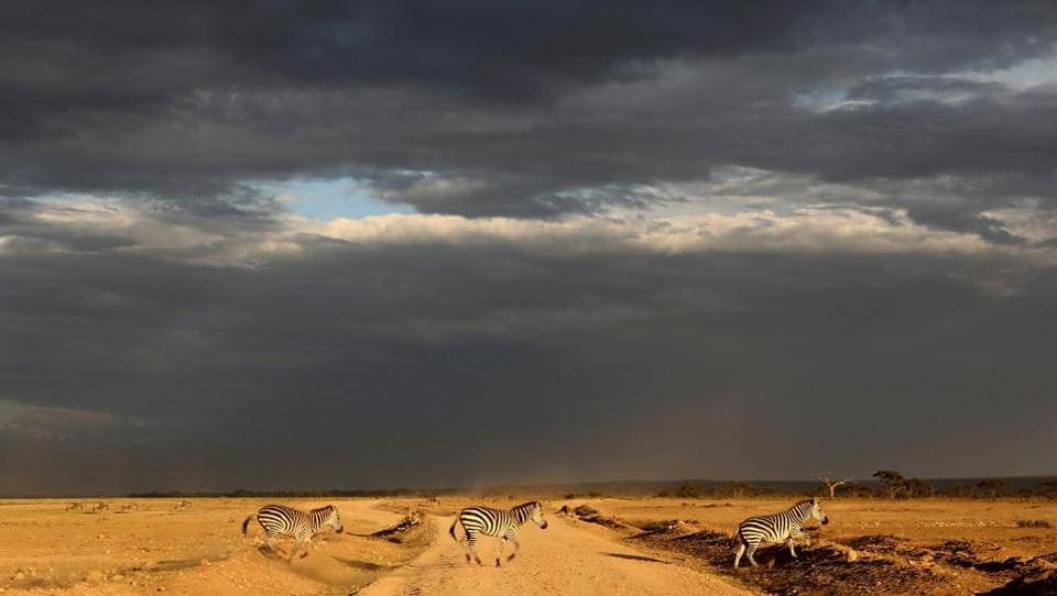 Zebras cross a road just before rain in Amboseli National Park. It is known for its large elephant herds and views of immense Mount Kilimanjaro, across the border in Tanzania (Goran Tomasevic  / REUTERS)