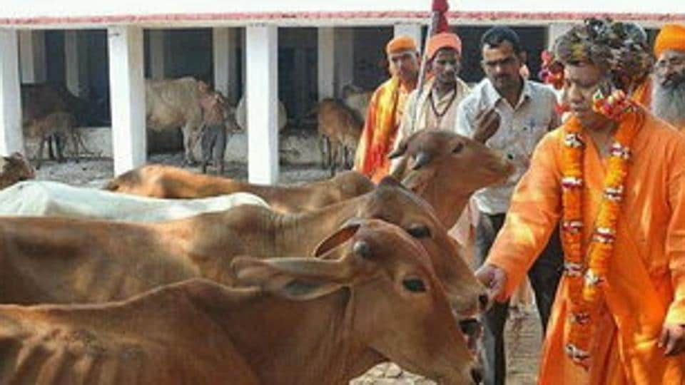 Yogi Adityanath's 'gaushala' is set up in across two acres of land on the temple premises.