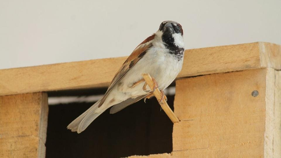 Sparrow day,Bird house,Sparrow conservation