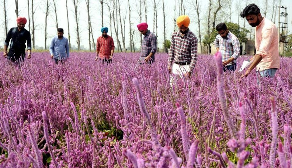 LEARNING IT! Students on a study tour about varieties of flowers near Malerkotla in Sangrur district, Punjab, on Monday, March 20. (Bharat Bhushan/HT)