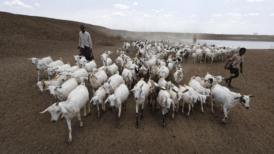 A herder drives his animals away after watering them at one of the few watering holes in the area, near the drought-affected village of Bandarero, near Moyale town on the Ethiopian border, in northern Kenya, on March 3.