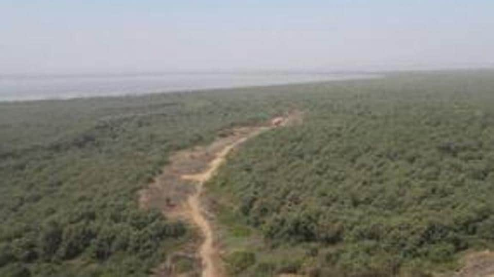 With a space crunch in and around Mumbai, realty vultures are preying on mangroves, putting coastal eco-system in jeopardy.