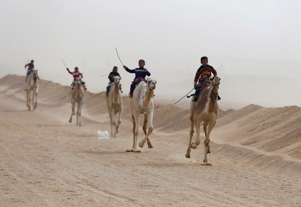 Jockeys, most of whom are children, compete on their mounts during the opening of the International Camel Racing festival at the Sarabium desert in Ismailia, Egypt. (Amr Abdallah Dalsh / Reuters)