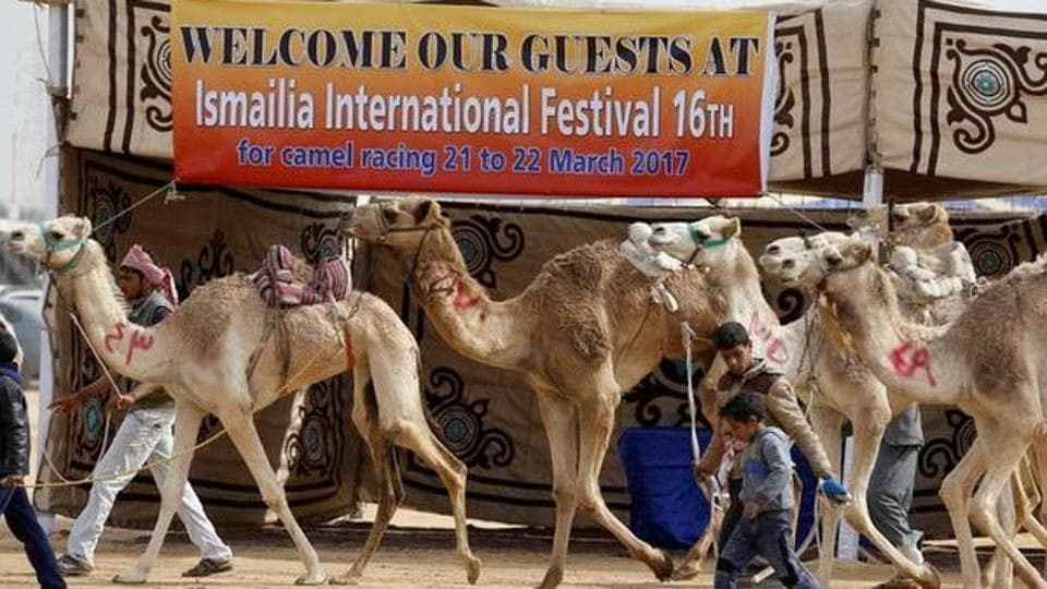 The race is part of an annual camel festival outside the city of Ismailia which has attracted participants from 13 Arab countries this year, as well as enthusiasts from France, Germany, Italy and Austria. (Amr Abdallah Dalsh / Reuters)