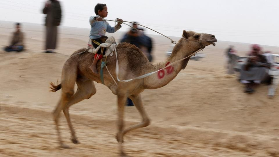A child jockey, competes on his mount during the International Camel Racing festival. (Amr Abdallah Dalsh / Reuters)
