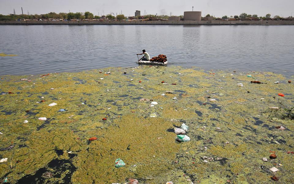 A man collects coconuts thrown as offerings by worshippers on the weed covered Sabarmati river, ahead of World Water Day, in Ahmedabad, India, March 21, 2017.