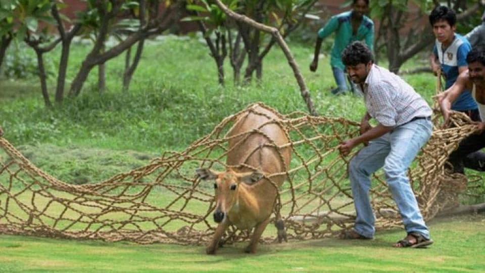 Madhya Pradesh,MP GOvernment,Nilgai