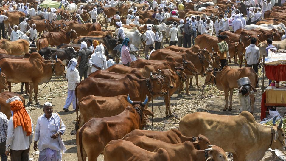 Cattle Smuggling,Uttar Pradesh,Agra