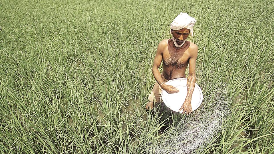 A farmer sprays fertilizer in a paddy field on the outskirts of Ahmadabad, India.The government has ruled out farm loan waivers by the Centre but said states can utilise their own resources in this regard.