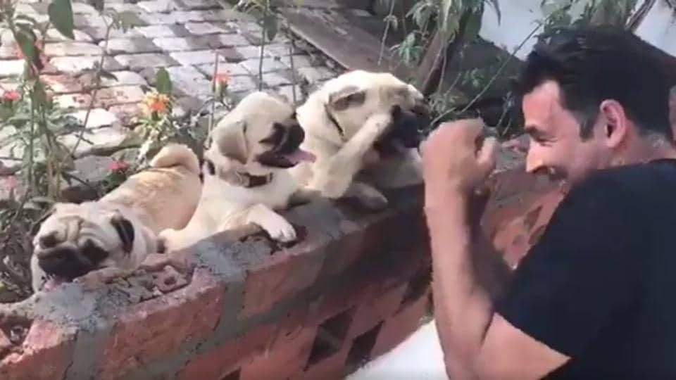 Akshay Kumar, a fitness freak, shared an adorable  video where he is boxing with cubs.