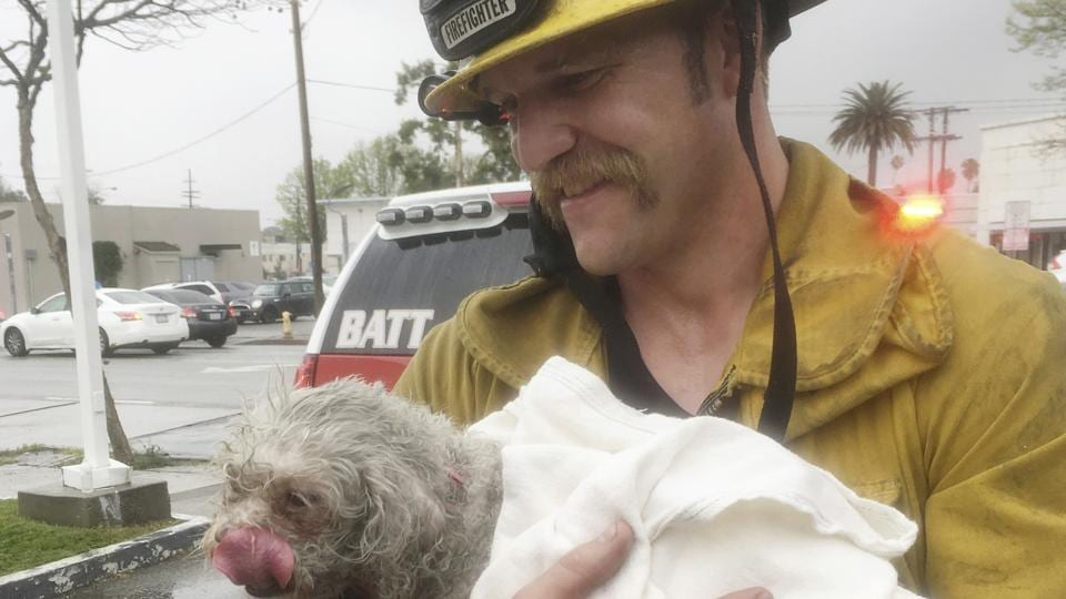Santa Monica firefighter Andrew Klein holds the dog, Nalu, after rescuing it from a house fire in California.