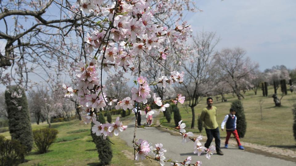 Till 1970, the people of Srinagar would assemble there to announce the arrival of the spring season.
