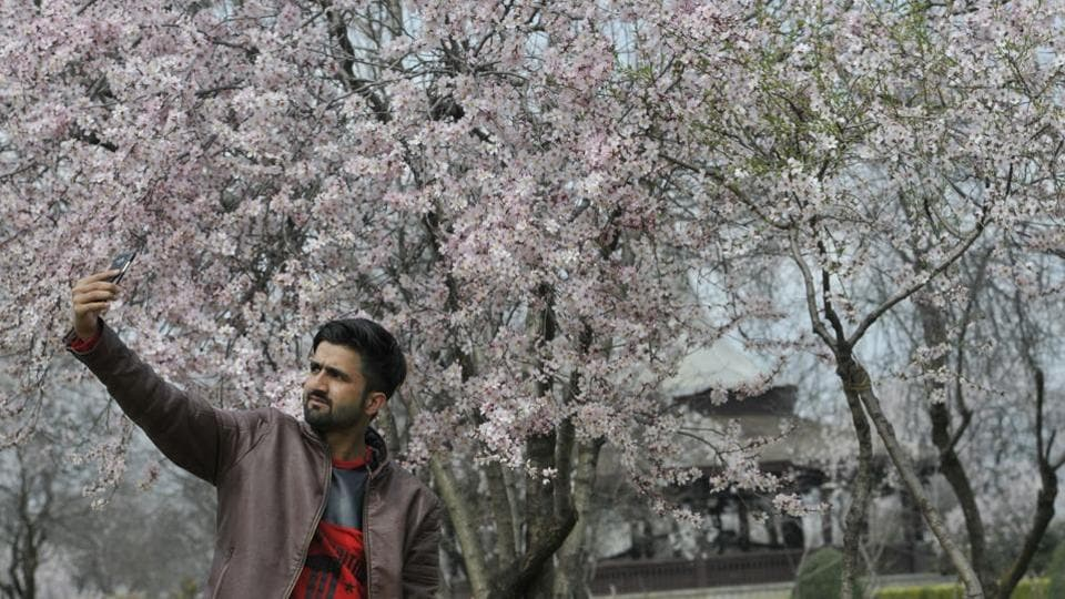 A man takes selfie with the bloomed almond  trees at Badam wari in old downtown Srinagar.
