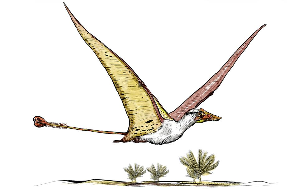 A bit of a worry, this one. It's the only avian dinosaur found in India so far. But only a fragment was unearthed, so its existence is still in doubt. The Campylognathus indicus was named for its upward hooked or curved jaw. It's likely to have hunted for fish along the shallow seas between Rajasthan, Jharkhand and Meghalaya. (Srikrishna Patkar/HT Illustration)