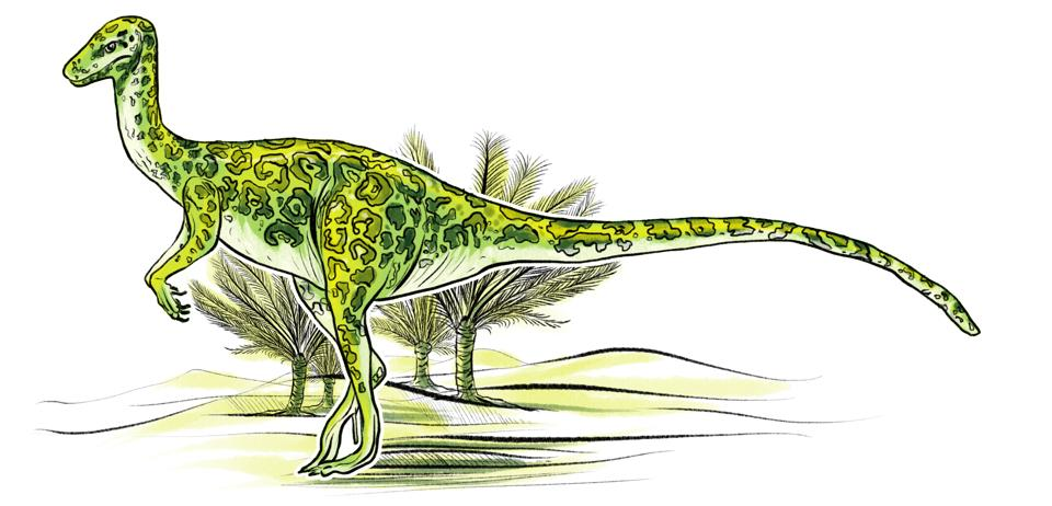 This wonderfully named dinosaur, the Jubbulpuria is named after Jabalpur in MP, where fossils were excavated. It was small, barely half a metre tall and 1.2 metres long. But it was known to be a sharp predator. (Srikrishna Patkar/HT Illustration)
