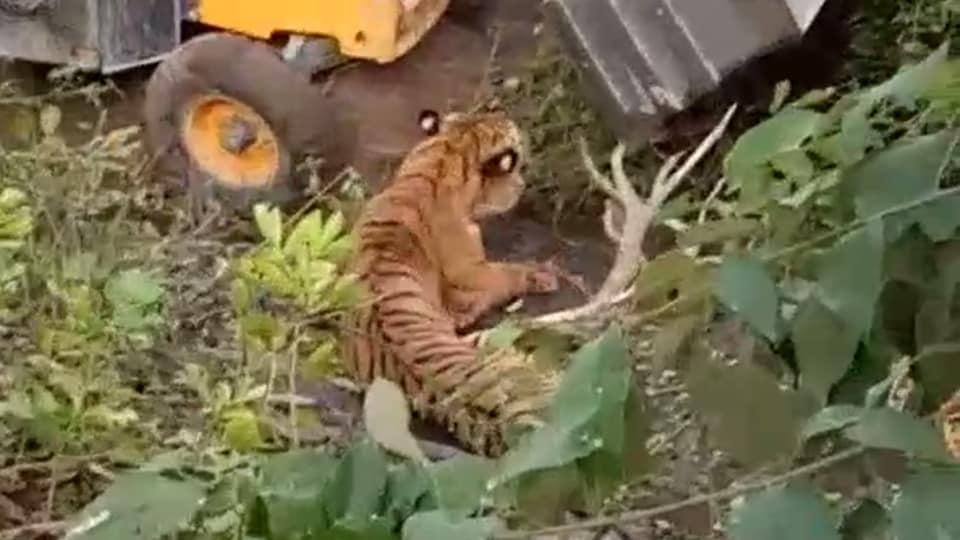 Tiger,Earthmover,JCB