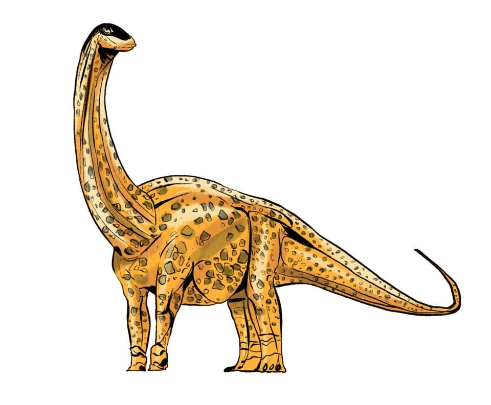 At 13.5 metres and nearly 5 metres wide, the Kotasaurus yamanpalliensis would have stood tall in Yamanapalli, Telangana, where bones from 13 animals were found. The four-legged dinosaur gets its name from the Kota village nearby and seemed to have been a plant-eater.  (Srikrishna Patkar/HT Illustration)
