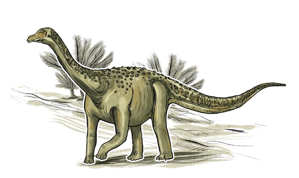 Yes, the Jainosaurus is a herbivore. Discovered near Jabalpur in Madhya Pradesh and named for palaeontologist Sohan Lal Jain, it walked on all fours and was 18 metres long with a 6-metre neck. (Srikrishna Patkar/HT Illustration)