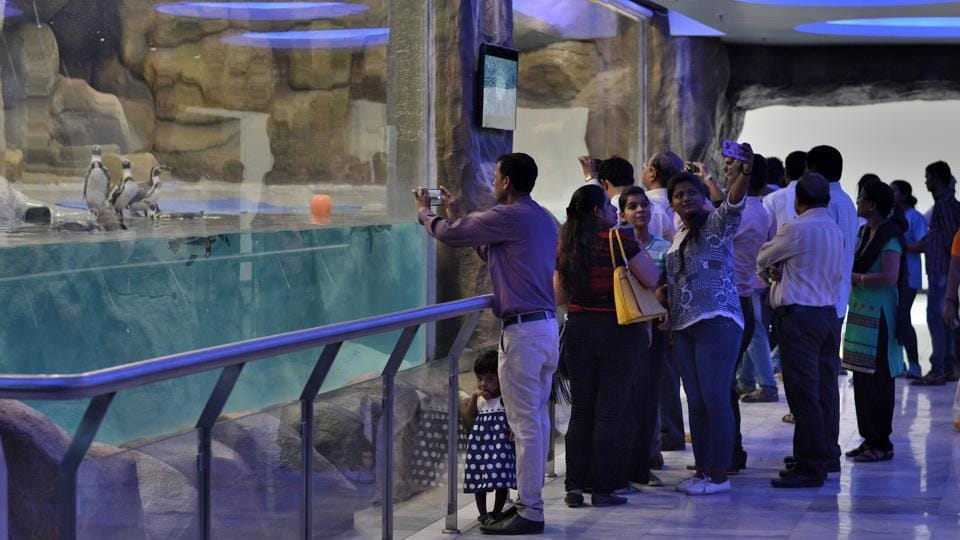 The St. Louis Zoo's own happy feet | Student Life |Happy Feet Zoo Aquarium