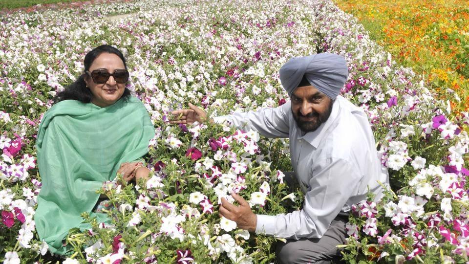 Image Result For Punjab Farms