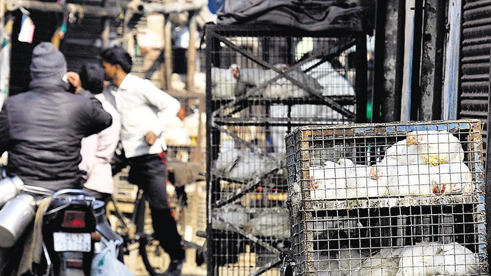 According to officials cracking down on unauthorised meat shops, most of the 100 shops in Noida and Greater Noida were found to be legal.