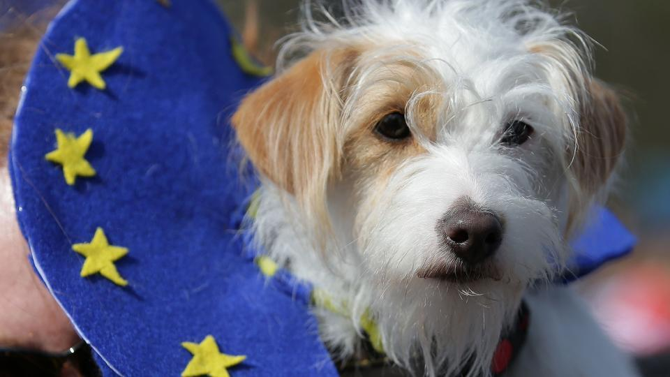 A dog wears an EU flag-themed collar during the march. (Daniel Leal-Olivas/AFP)