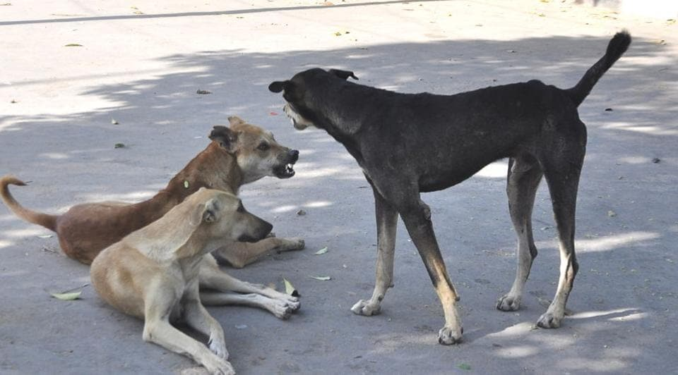 Stray dogs have become an alarming menace.