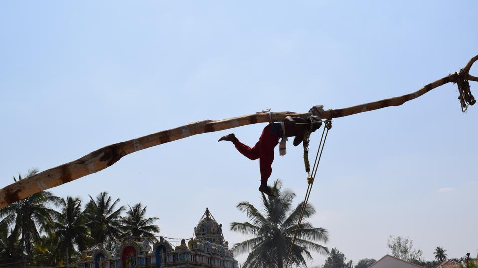 A Dalit man performs the Sidi ritual, where they are fastened to a tree with a metal hook drilled into their backs, at the biennial Udusalamma fair in Hariharpur village in Karnataka.