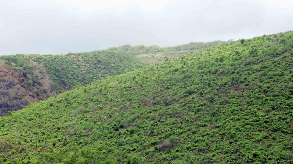 The forest areas under SGNP that has been declared an eco-sensitive zone. Mining and quarrying has continued here, despite a ministry order prohibiting them.