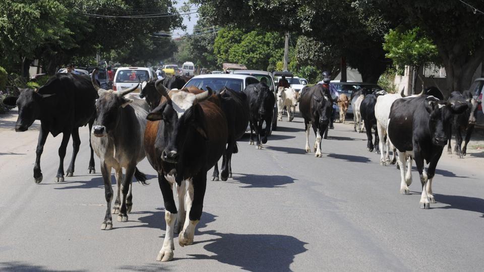 Gurgaon,cow smuggling,auvansh Sanrakshan and Gausamvardhan Act